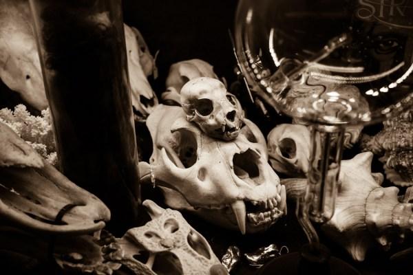 Viktor Wynd Collection Animal Skulls