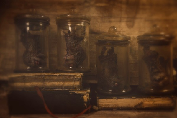 Apothecary Specimen Jars - Bird Heads