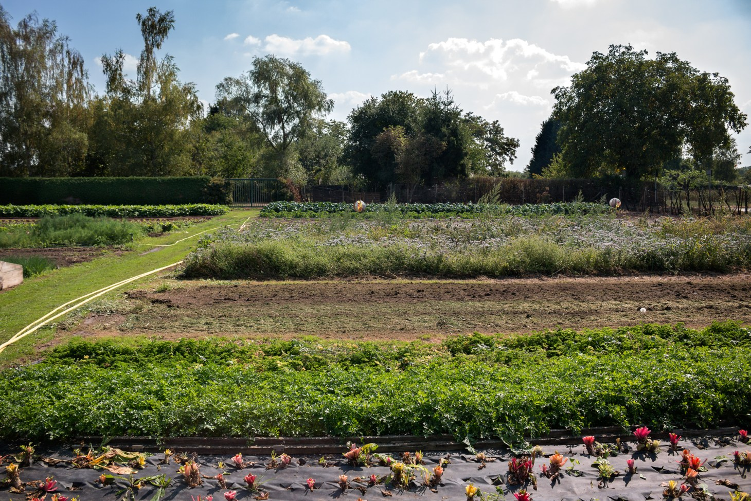 Freilandfelder mit Kräutern im September