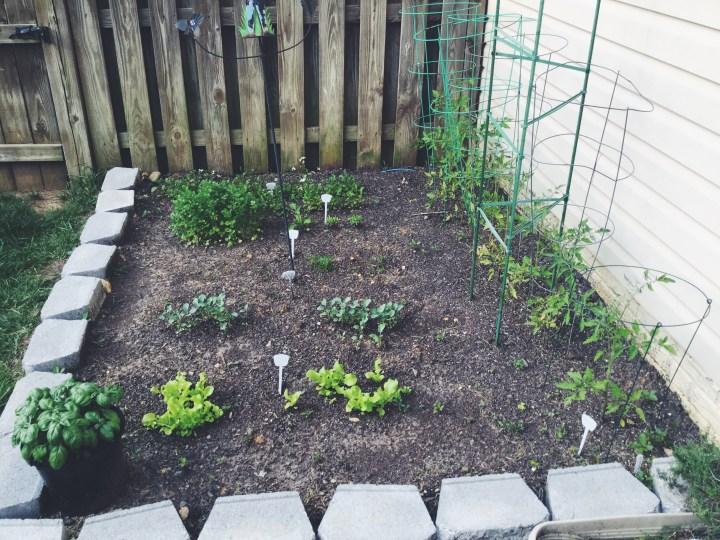 Planting Your Garden!