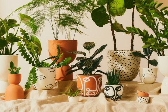 franca ceramics, All eyes on Franca, a local Brooklyn ceramics studio with global roots