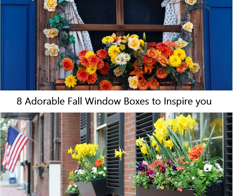 8 Adorable Fall Window Boxes to Inspire you