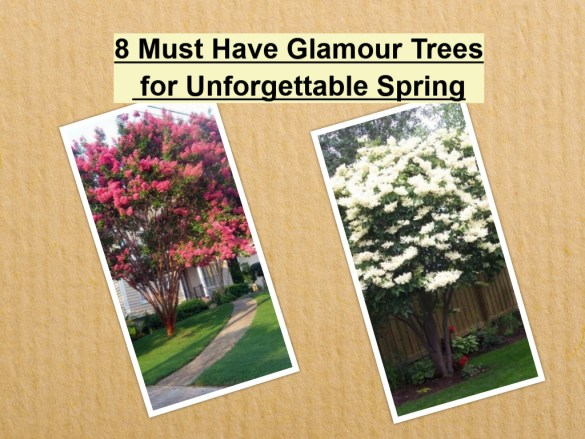 8 Must Have Glamour Trees For Unforgettable Spring