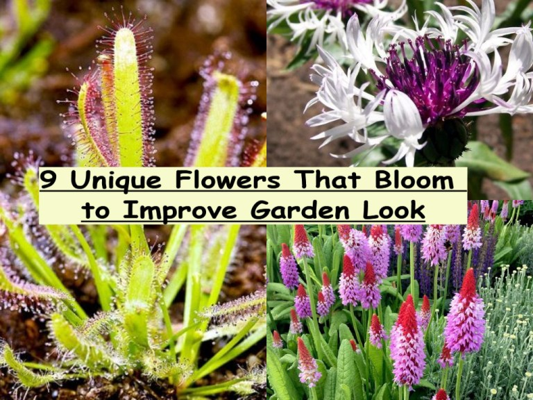 9 Unique Flowers That Bloom To Improve Garden Look