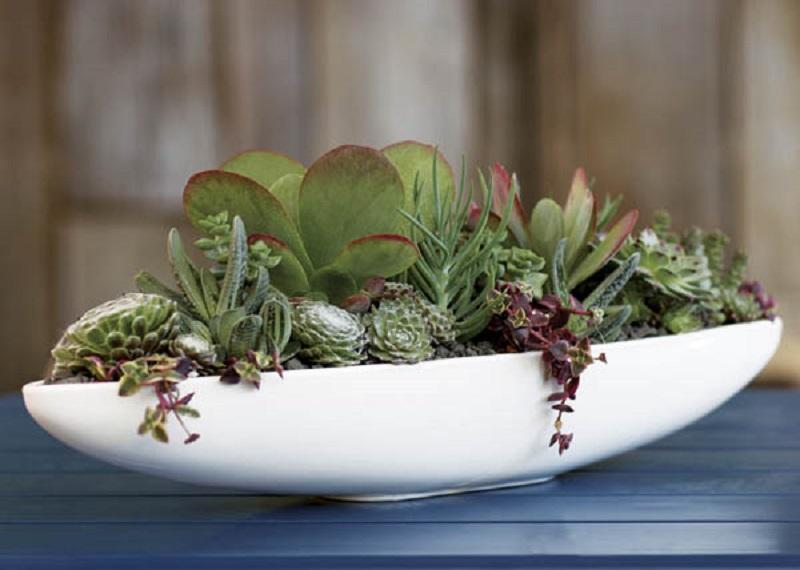 Canoe Pot