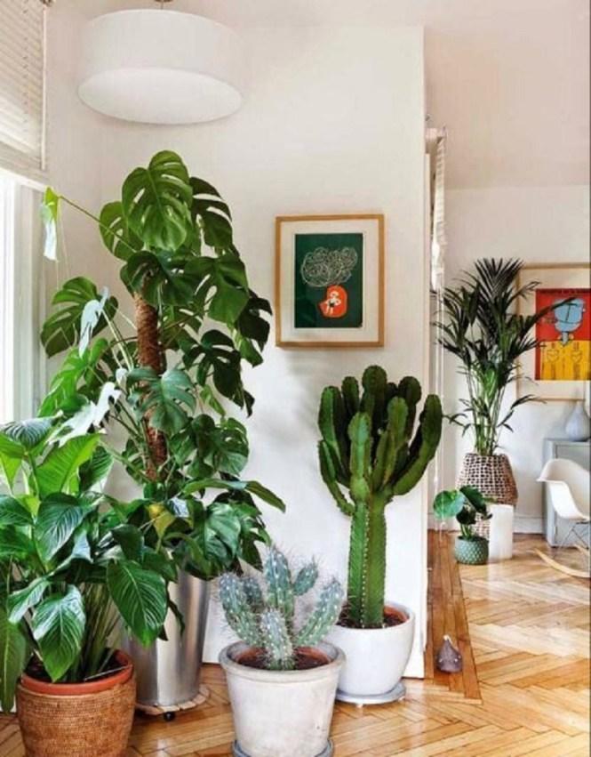 Corner Indoor Garden