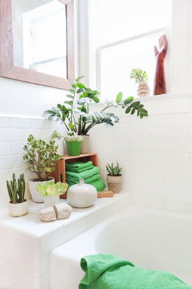 Use Green Plant
