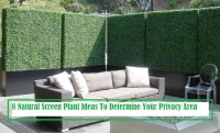 8 Natural Screen Plant Ideas To Determine Your Privacy Area