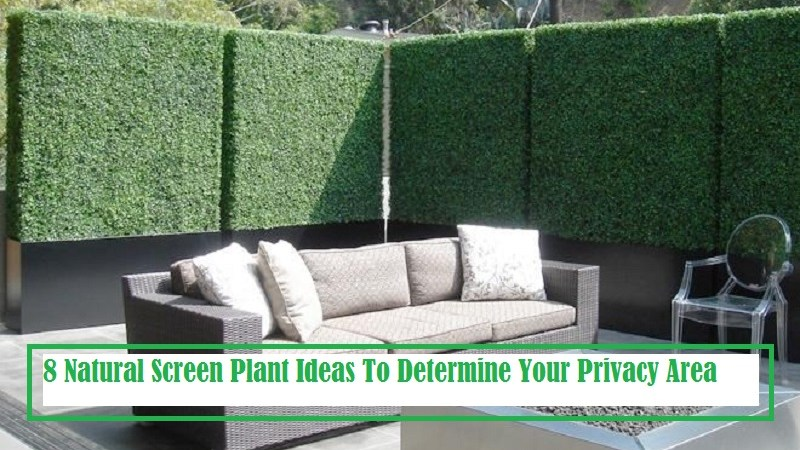 8 Natural Screen Plant Ideas To Determine More Privacy Area