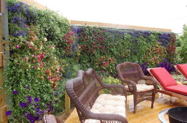 Flowering Cover Plants For A Privacy Screen