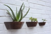 Wall Mounted Cactus Planter