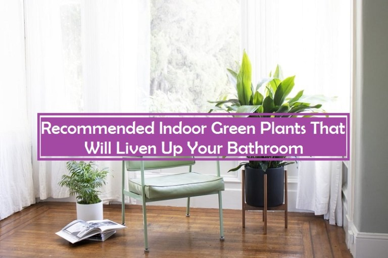Recommended Indoor Green Plants That Will Liven Up Your Bathroom