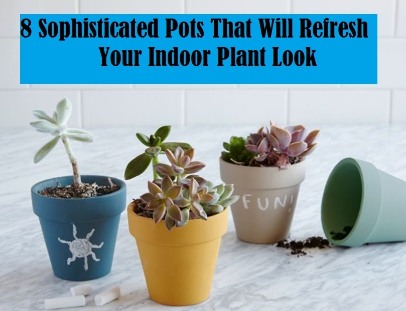 8 Sophisticated Pots That Will Refresh Your Indoor Plant Look
