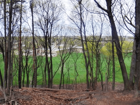 Adding a wooded haven to the Cobb's Hill series with a stroll through Washington Grove
