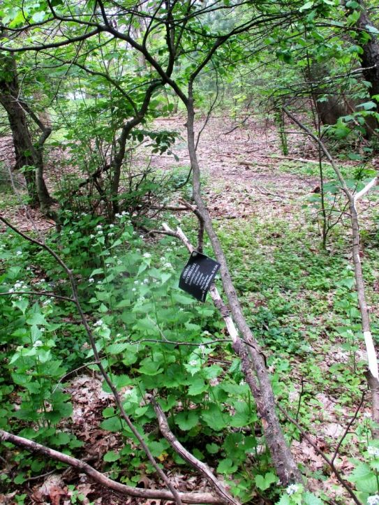 in wooded area