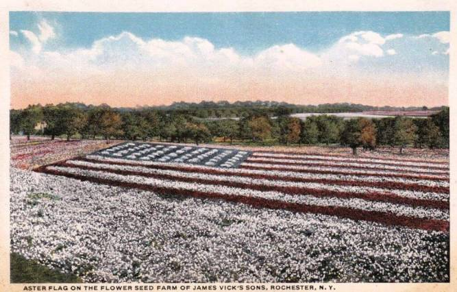 The Vick's WWI Aster Flag
