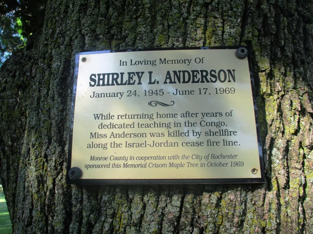 At Cobb's Hill, a tree, a plaque and fifty years after the death of