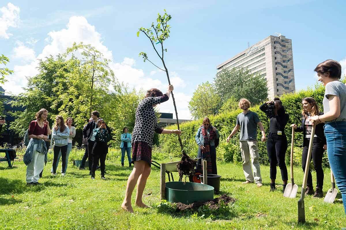 campus garden tree