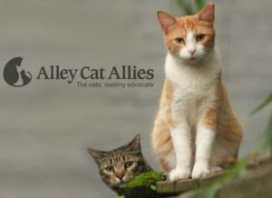 AlleyCatAllies