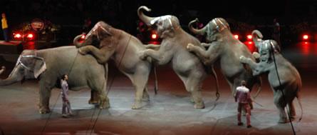 circus-elephants-lineup