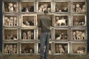 puppy-mill-cages