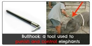 bullhook