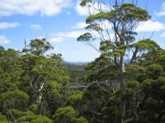 Valley of The Giants, Walpole, Western Australia