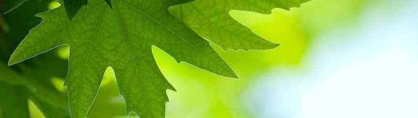 850x240Green-Leaves-Reflectin