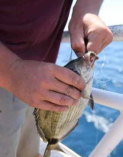 Hundreds_hooked_on_Morehead_City_fishing_trip_140531-M-BN069-025.jpg