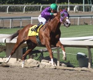 California Chrome winning the San Felipe Stakes at Santa Anita in March 2014.
