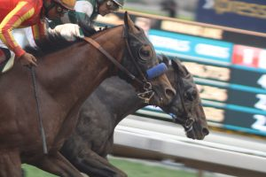 Hard Aces noses out Hoppertunity in the Gold Cup at Santa Anita. Photo by Terri Keith.