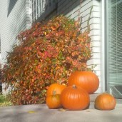 October Pumpkins