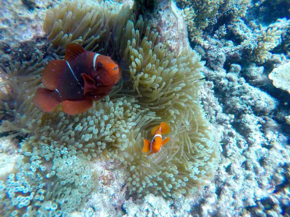 Great Barrier Reef, Australia