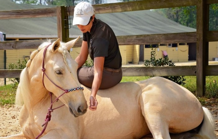 Local Horse Trainer Wins With Mustangs