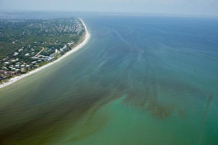 The Science Behind Florida's Red Tide
