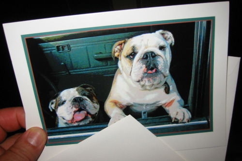 Boz and Gracie Bulldogs Bullish on Biscuits