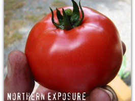 northern exposure tomato