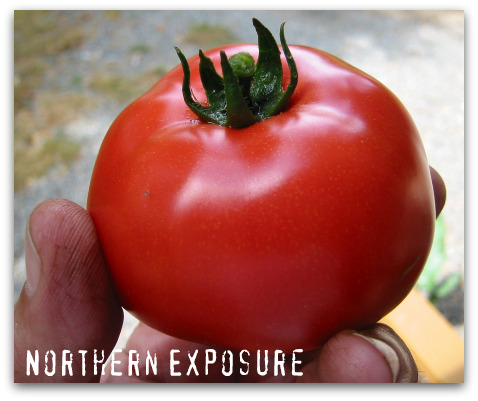 northern exposure tomato