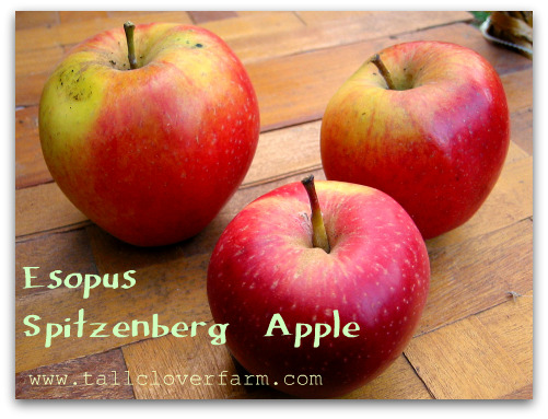 Esopus Spitzenberg Apple