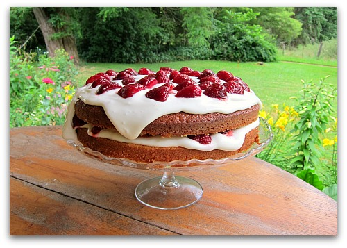 My Strawberry Cake Is Going to the Dogs