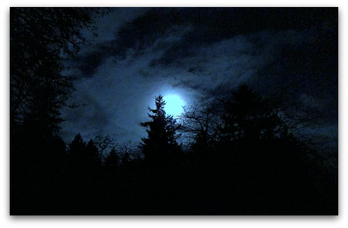 full moon over the firs Vashon Island