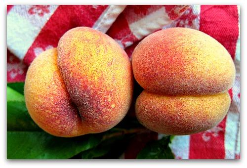 Growing Peach Trees Organically: Peach Leaf Curl Resistant Varieties I Grow