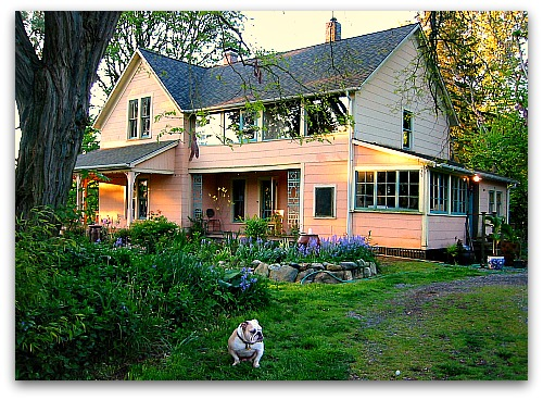 bulldog in front of farmhouse - painting my house