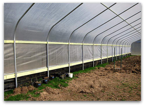 interior look at high tunnel hoophouse