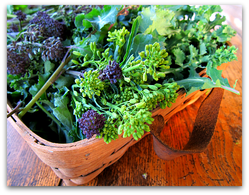 kale and purple sprouting broccoli fresh