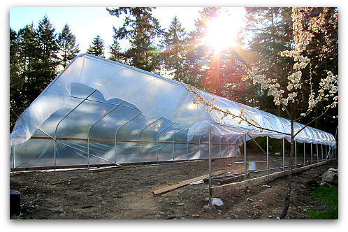 greenhouse covered