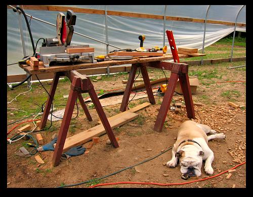 Boz the bulldog naps in the construction zone