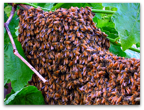 Tom's Bee Movie: Gone With the Swarm