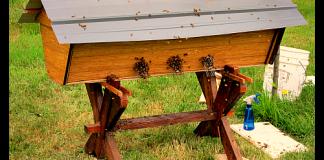 top bar hive bees