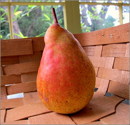 Orcas Pear: My One and Only
